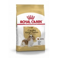 Cavalier King Charles Adult...